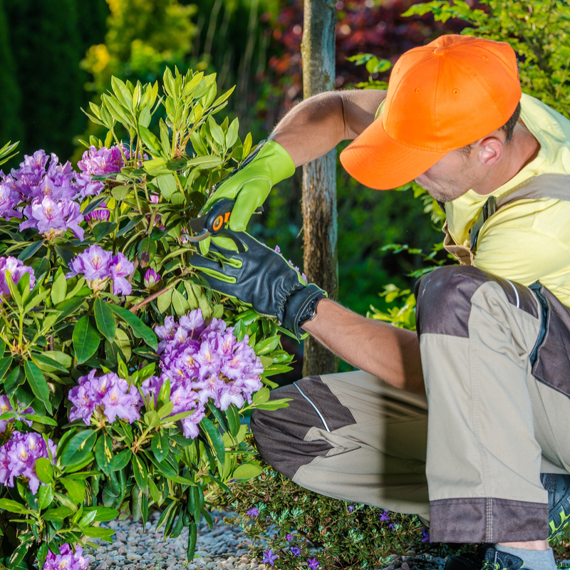 Landscaping Services in Alpharetta, GA