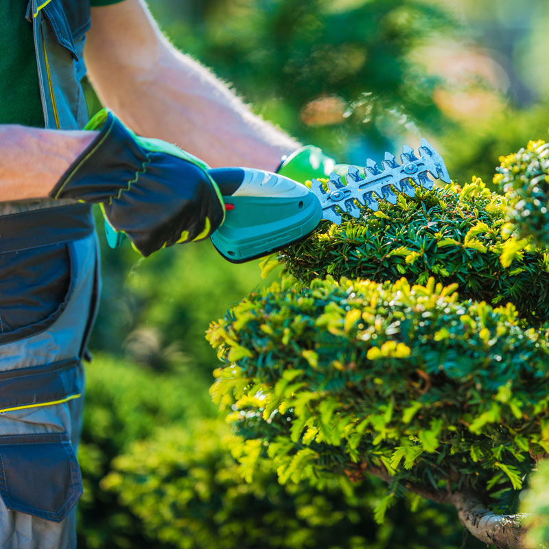Landscaping Services in Canton, GA